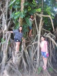 Balete Tree, Maria Aurora, Aurora, Quezon
