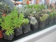 succulent-plants-buffex-singkaban-festival-2015-bulacan