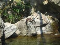 Ocean-Park-Hong-Kong-otter