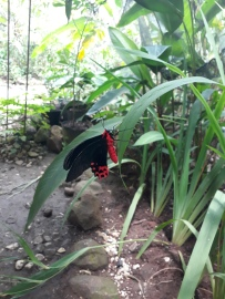 Butterfly-haven-bohol-philippines