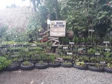 Herbs-bohol-bee-farm-philippines